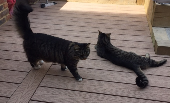 Two cats on a garden deck