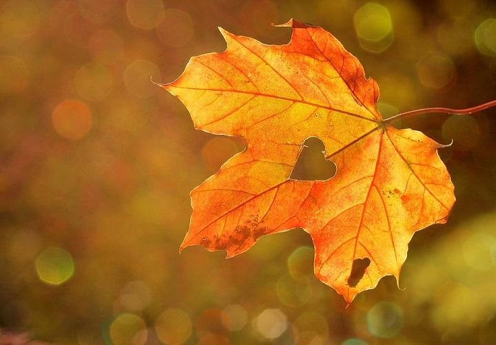 autumn garden ideas, autumn garden activities